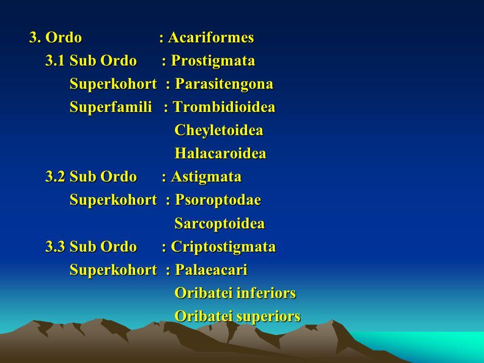 3. Ordo : Acariformes 3.1 Sub Ordo : Prostigmata. Superkohort : Parasitengona.