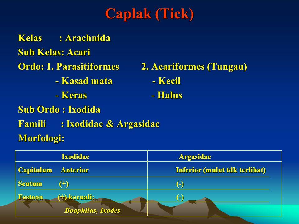 Caplak (Tick) Kelas : Arachnida Sub Kelas: Acari