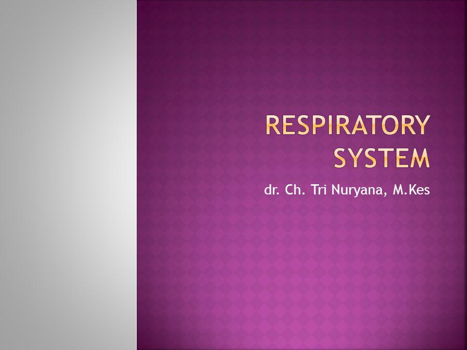 Respiratory System dr. Ch. Tri Nuryana, M.Kes