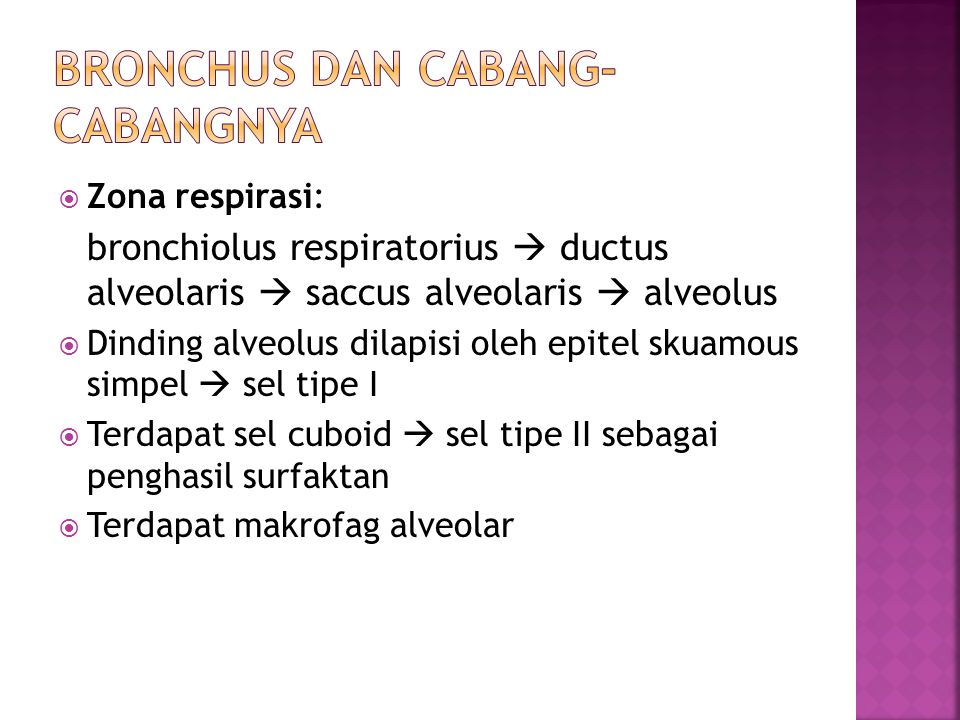 Bronchus dan Cabang-cabangnya