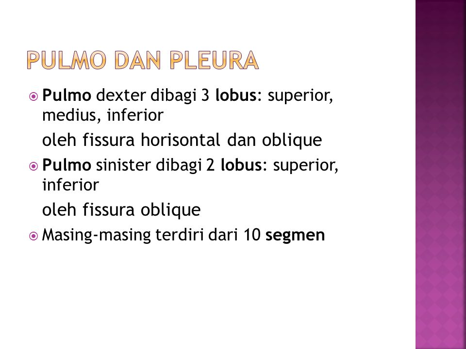 Pulmo dan Pleura Pulmo dexter dibagi 3 lobus: superior, medius, inferior. oleh fissura horisontal dan oblique.