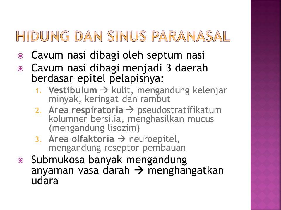 Hidung dan Sinus Paranasal