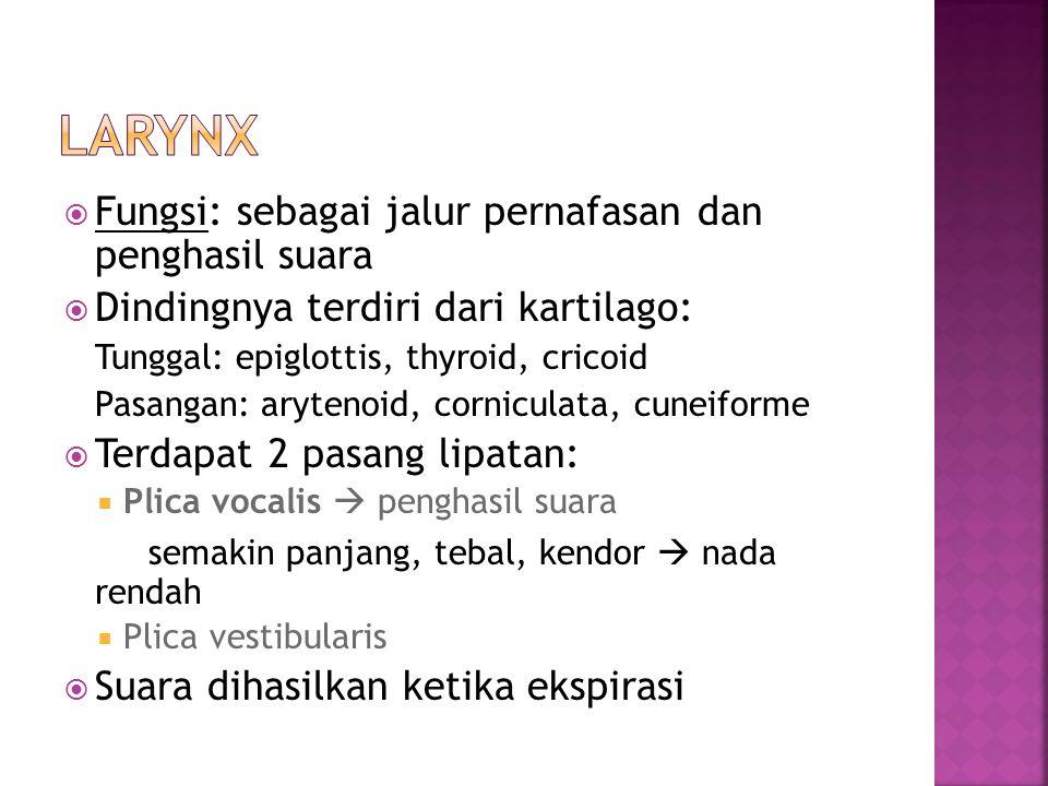 Larynx Fungsi: sebagai jalur pernafasan dan penghasil suara