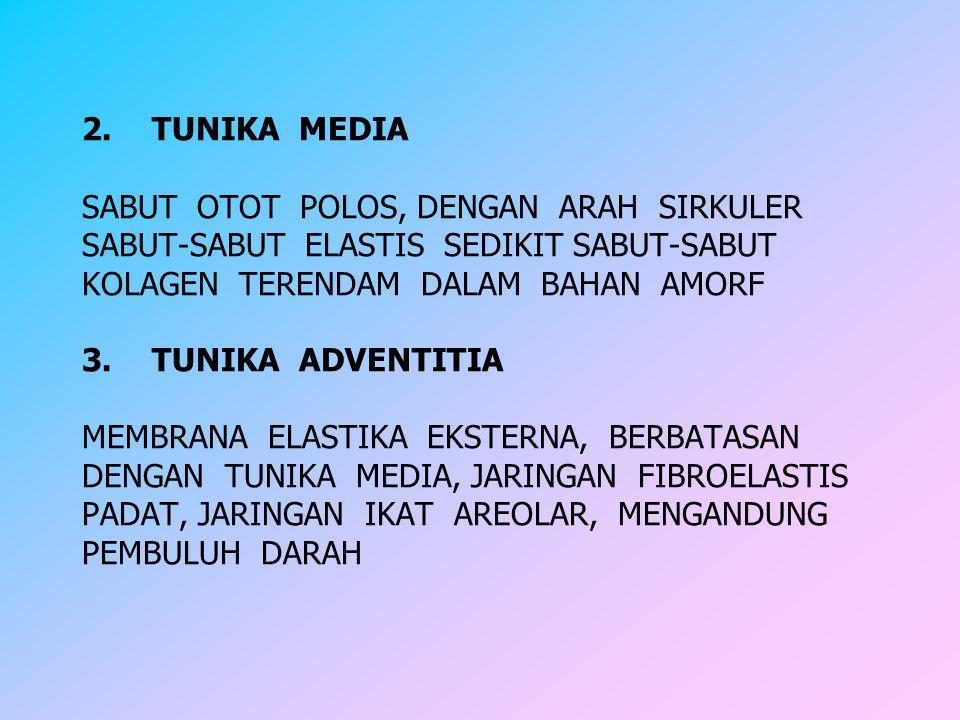 2. TUNIKA MEDIA SABUT OTOT POLOS, DENGAN ARAH SIRKULER SABUT-SABUT ELASTIS SEDIKIT SABUT-SABUT KOLAGEN TERENDAM DALAM BAHAN AMORF 3. TUNIKA ADVENTITIA MEMBRANA ELASTIKA EKSTERNA, BERBATASAN DENGAN TUNIKA MEDIA, JARINGAN FIBROELASTIS PADAT, JARINGAN IKAT AREOLAR, MENGANDUNG PEMBULUH DARAH