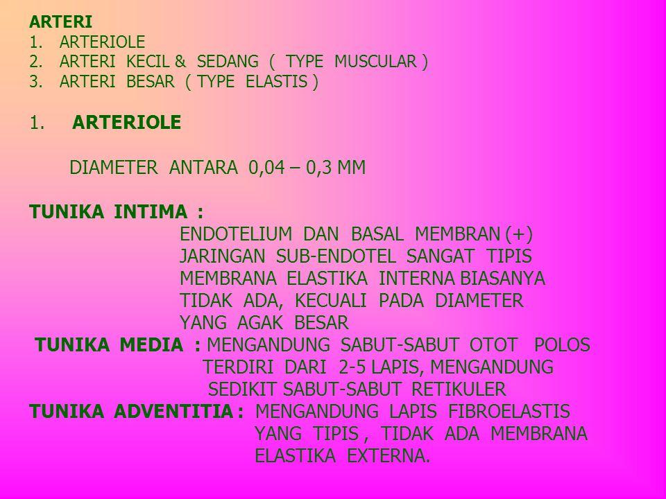 ARTERI 1. ARTERIOLE 2. ARTERI KECIL & SEDANG ( TYPE MUSCULAR ) 3
