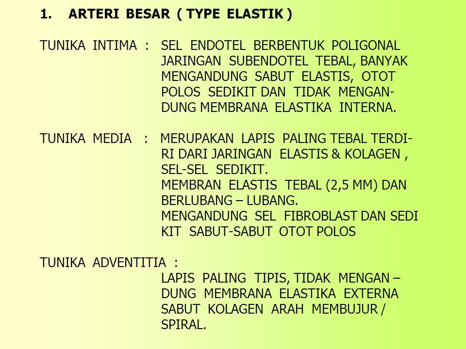1. ARTERI BESAR ( TYPE ELASTIK ) TUNIKA INTIMA : SEL ENDOTEL BERBENTUK POLIGONAL JARINGAN SUBENDOTEL TEBAL, BANYAK MENGANDUNG SABUT ELASTIS, OTOT POLOS SEDIKIT DAN TIDAK MENGAN- DUNG MEMBRANA ELASTIKA INTERNA.
