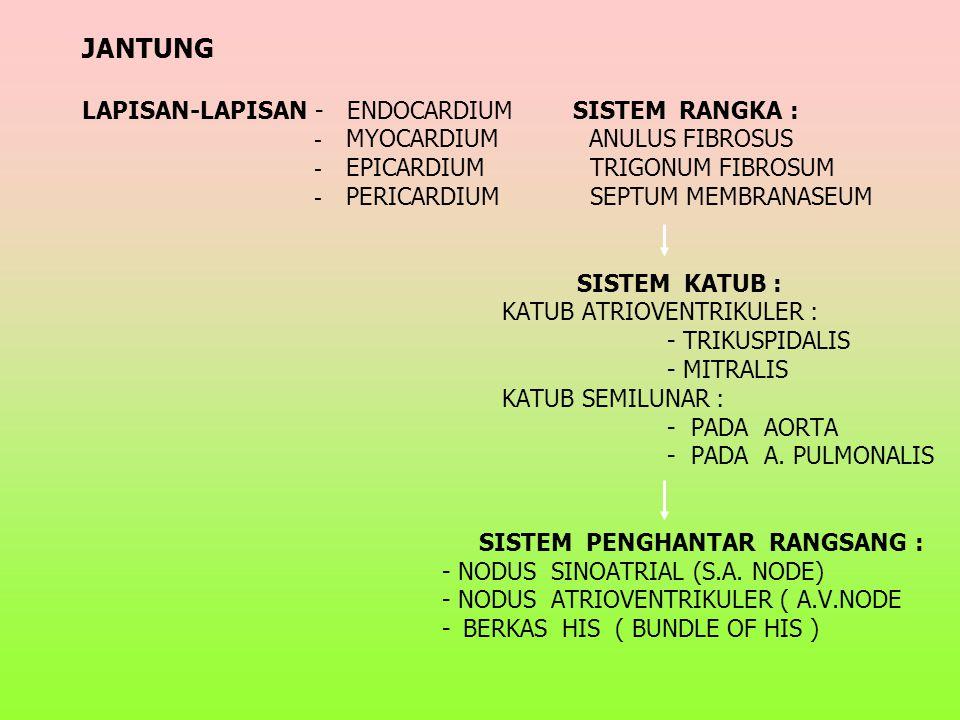 JANTUNG JANTUNG LAPISAN-LAPISAN - ENDOCARDIUM SISTEM RANGKA : - MYOCARDIUM ANULUS FIBROSUS - EPICARDIUM TRIGONUM FIBROSUM - PERICARDIUM SEPTUM MEMBRANASEUM SISTEM KATUB : KATUB ATRIOVENTRIKULER : - TRIKUSPIDALIS - MITRALIS KATUB SEMILUNAR : - PADA AORTA - PADA A.