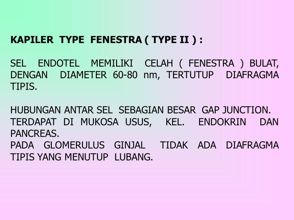 KAPILER TYPE FENESTRA ( TYPE II ) :