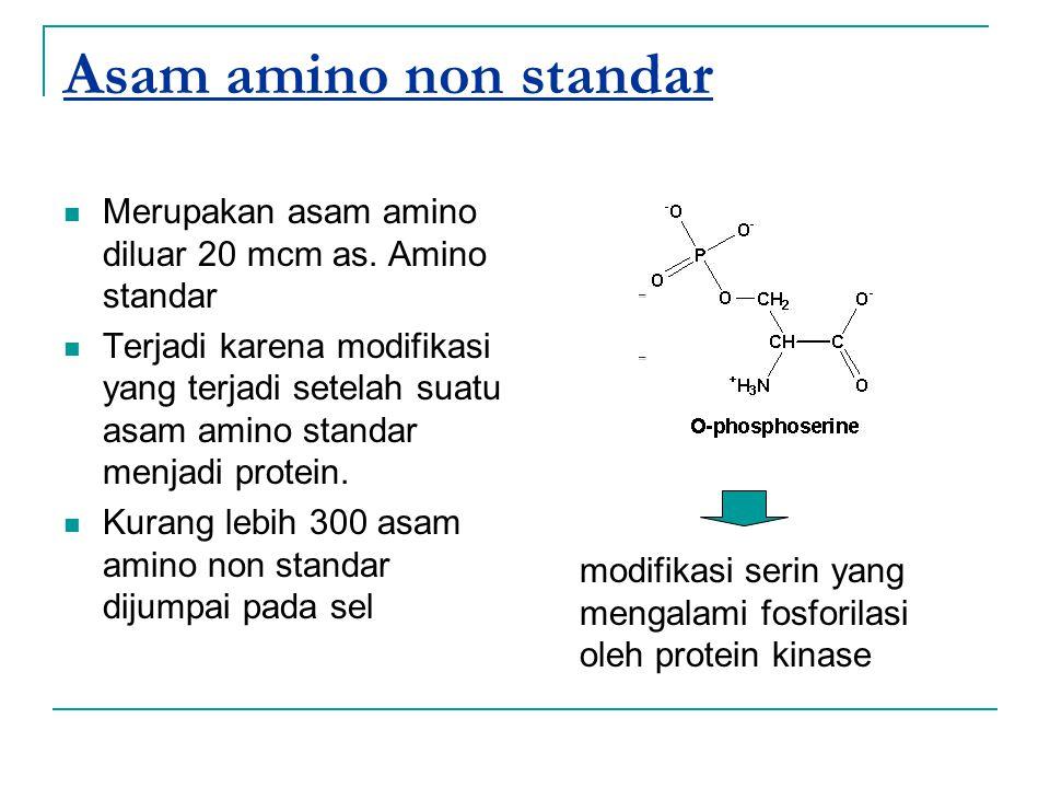 Asam amino non standar Merupakan asam amino diluar 20 mcm as. Amino standar.