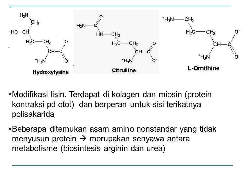 Modifikasi lisin. Terdapat di kolagen dan miosin (protein kontraksi pd otot) dan berperan untuk sisi terikatnya polisakarida