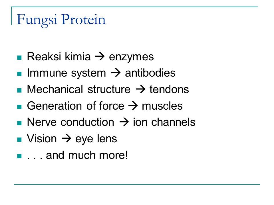 Fungsi Protein Reaksi kimia  enzymes Immune system  antibodies