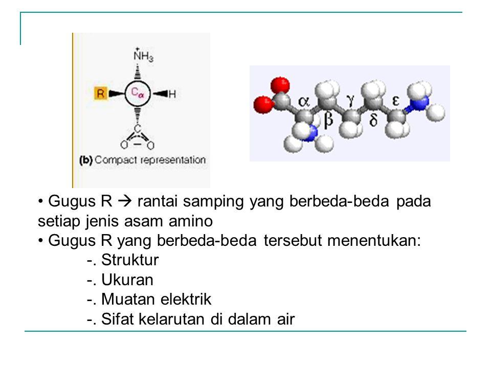 Gugus R  rantai samping yang berbeda-beda pada setiap jenis asam amino