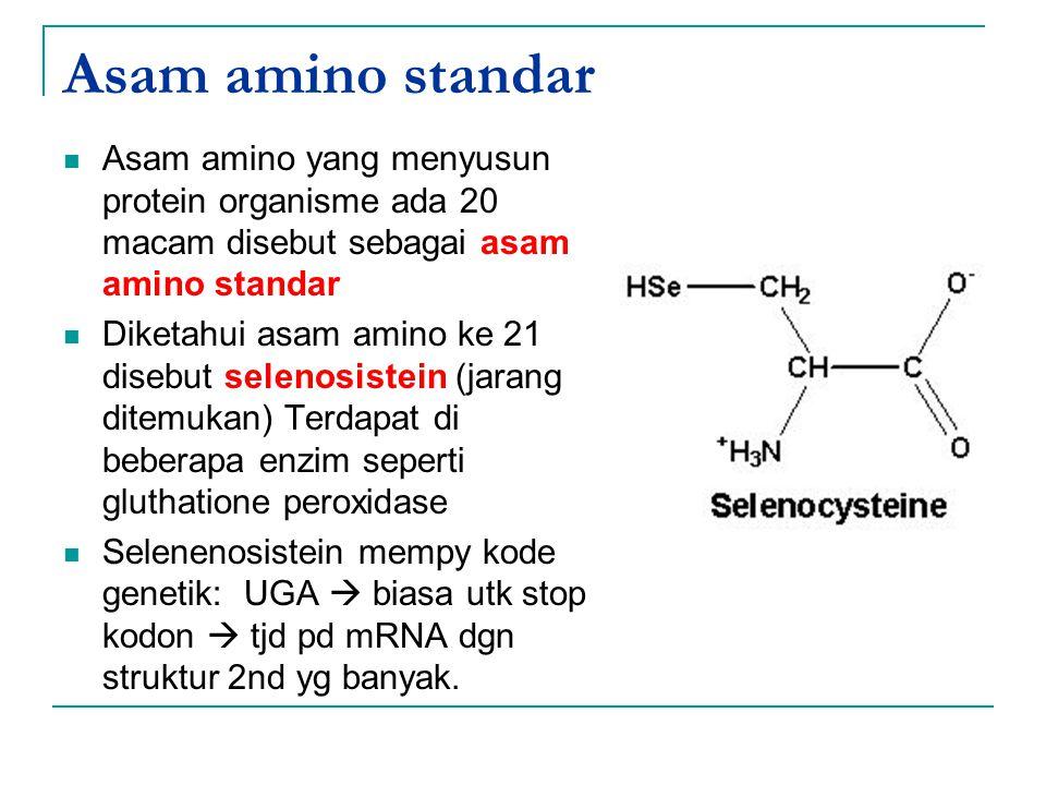 Asam amino standar Asam amino yang menyusun protein organisme ada 20 macam disebut sebagai asam amino standar.