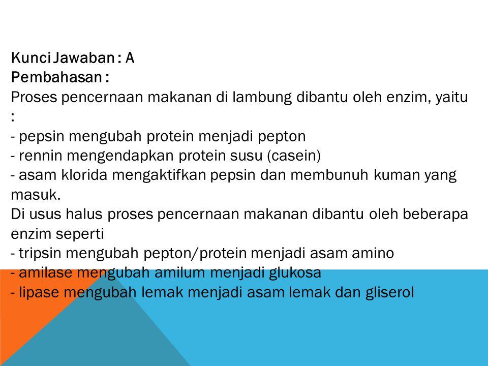 Kunci Jawaban : A Pembahasan : Proses pencernaan makanan di lambung dibantu oleh enzim, yaitu : - pepsin mengubah protein menjadi pepton.