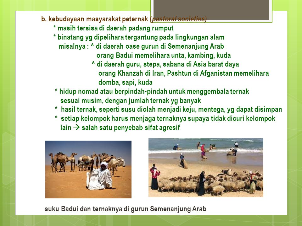 b. kebudayaan masyarakat peternak (pastoral societies)
