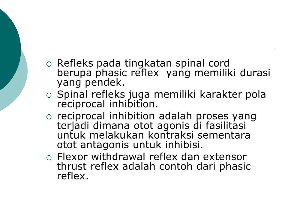 Refleks pada tingkatan spinal cord berupa phasic reflex yang memiliki durasi yang pendek.