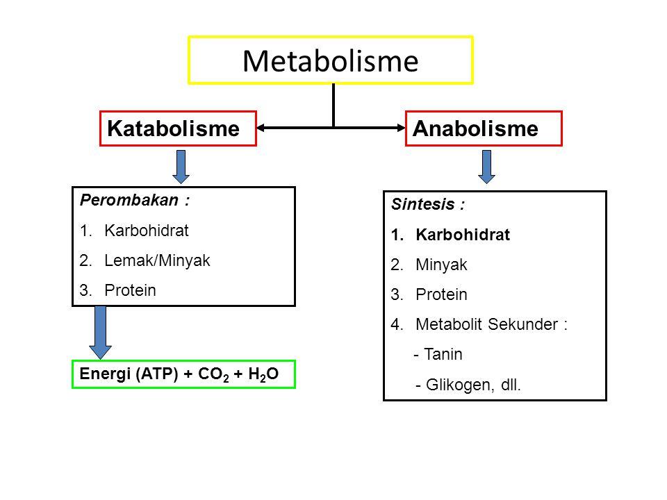 Metabolisme Katabolisme Anabolisme Perombakan : Sintesis : Karbohidrat