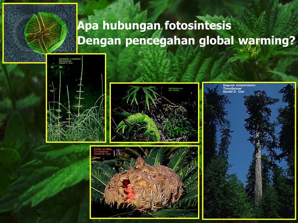 Apa hubungan fotosintesis