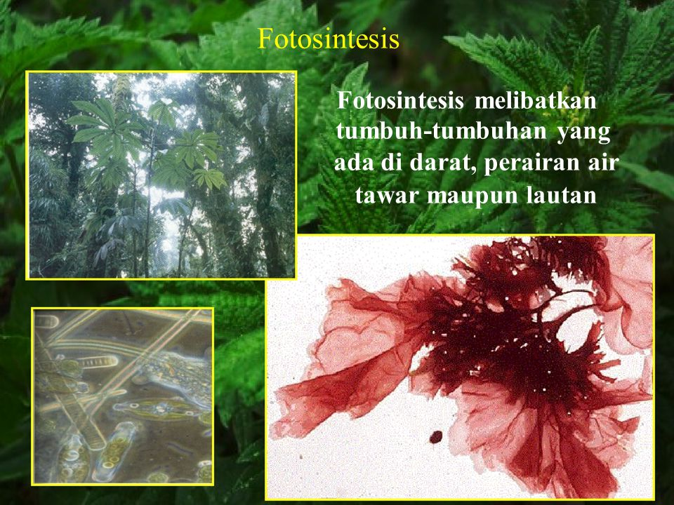Fotosintesis tumbuh-tumbuhan yang ada di darat, perairan air