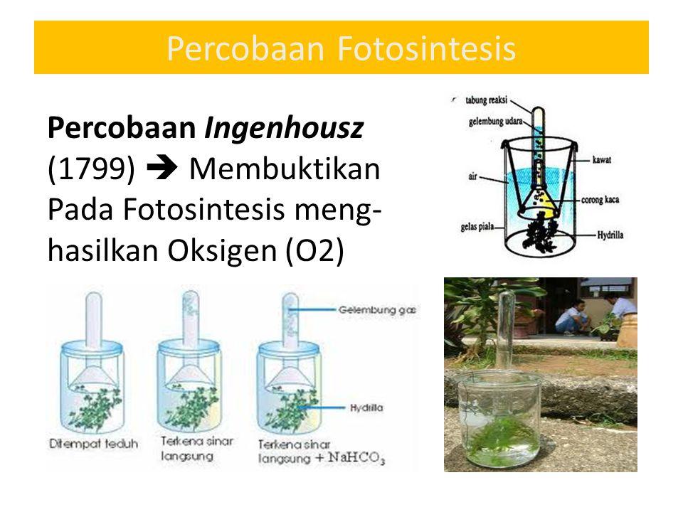 Percobaan Fotosintesis