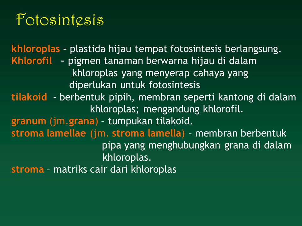 Fotosintesis khloroplas – plastida hijau tempat fotosintesis berlangsung. Khlorofil – pigmen tanaman berwarna hijau di dalam.