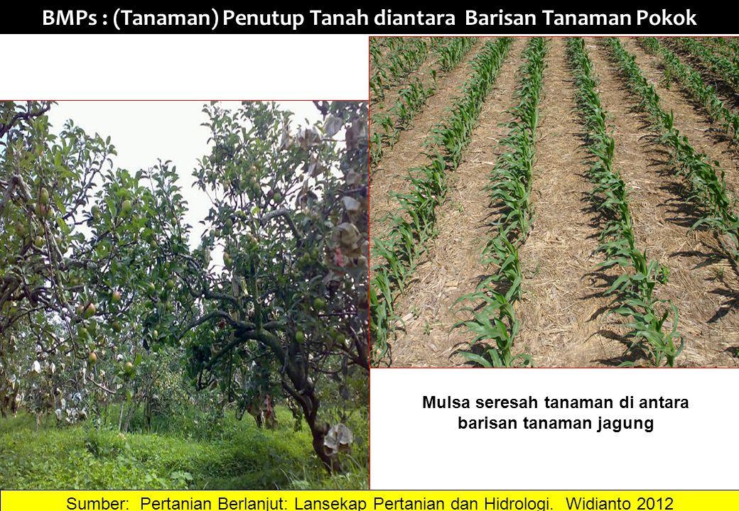 BMPs : (Tanaman) Penutup Tanah diantara Barisan Tanaman Pokok