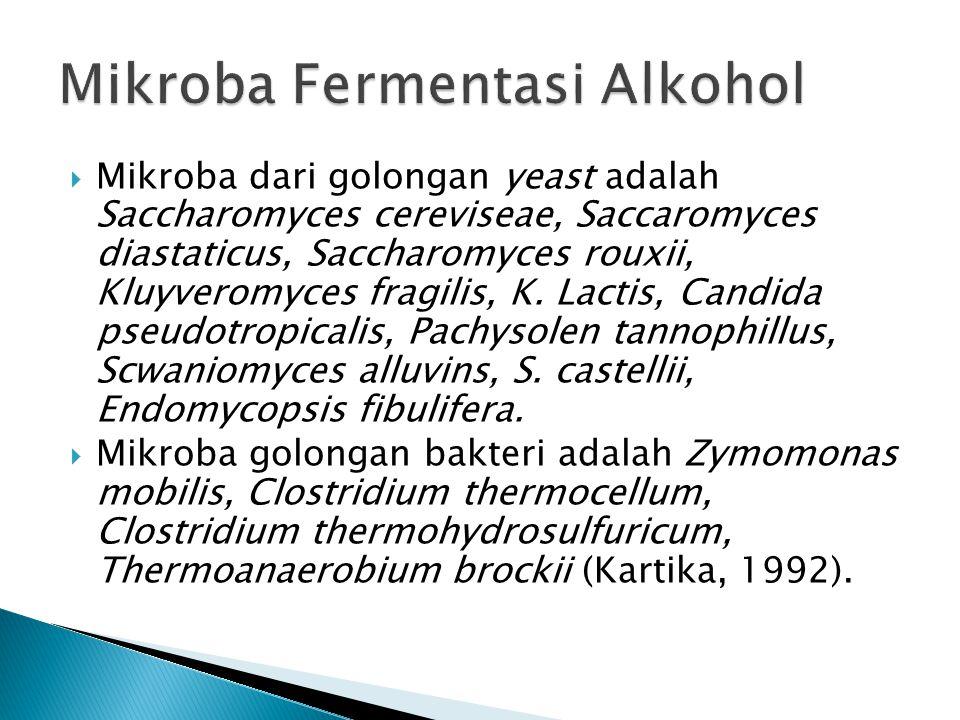 Mikroba Fermentasi Alkohol