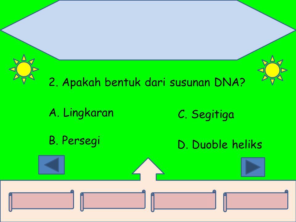 2. Apakah bentuk dari susunan DNA