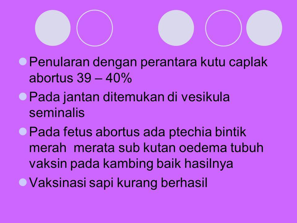 Penularan dengan perantara kutu caplak abortus 39 – 40%