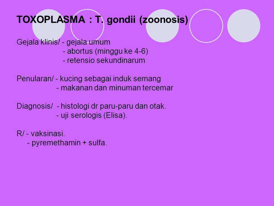 TOXOPLASMA : T. gondii (zoonosis)