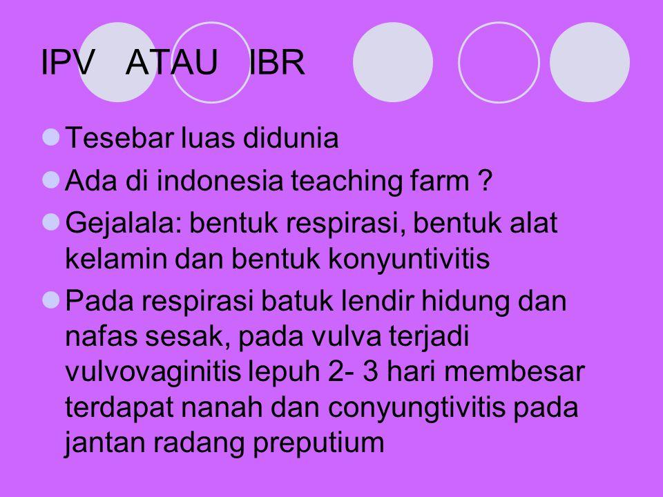IPV ATAU IBR Tesebar luas didunia Ada di indonesia teaching farm