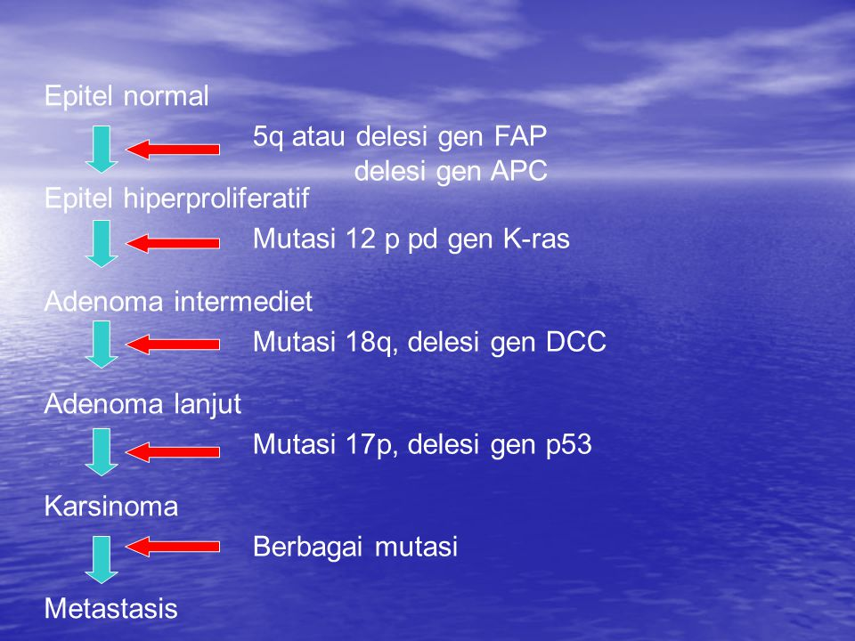 Epitel normal Epitel hiperproliferatif. Adenoma intermediet. Adenoma lanjut. Karsinoma. Metastasis.