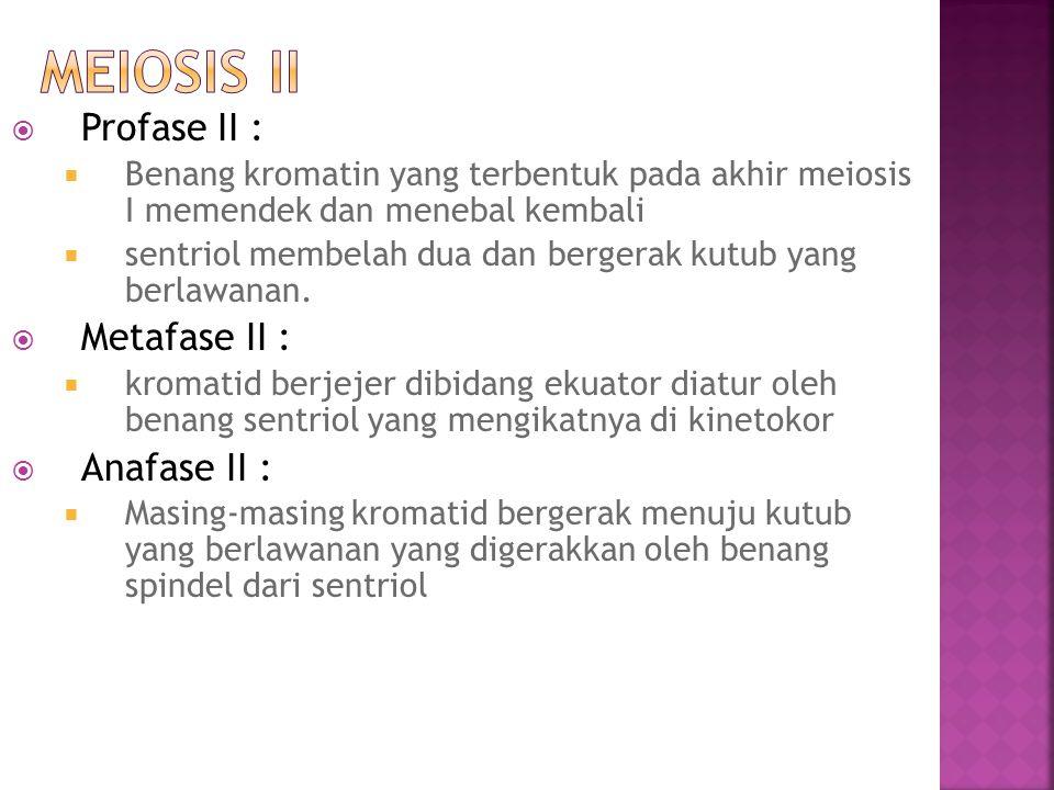 Meiosis II Profase II : Metafase II : Anafase II :