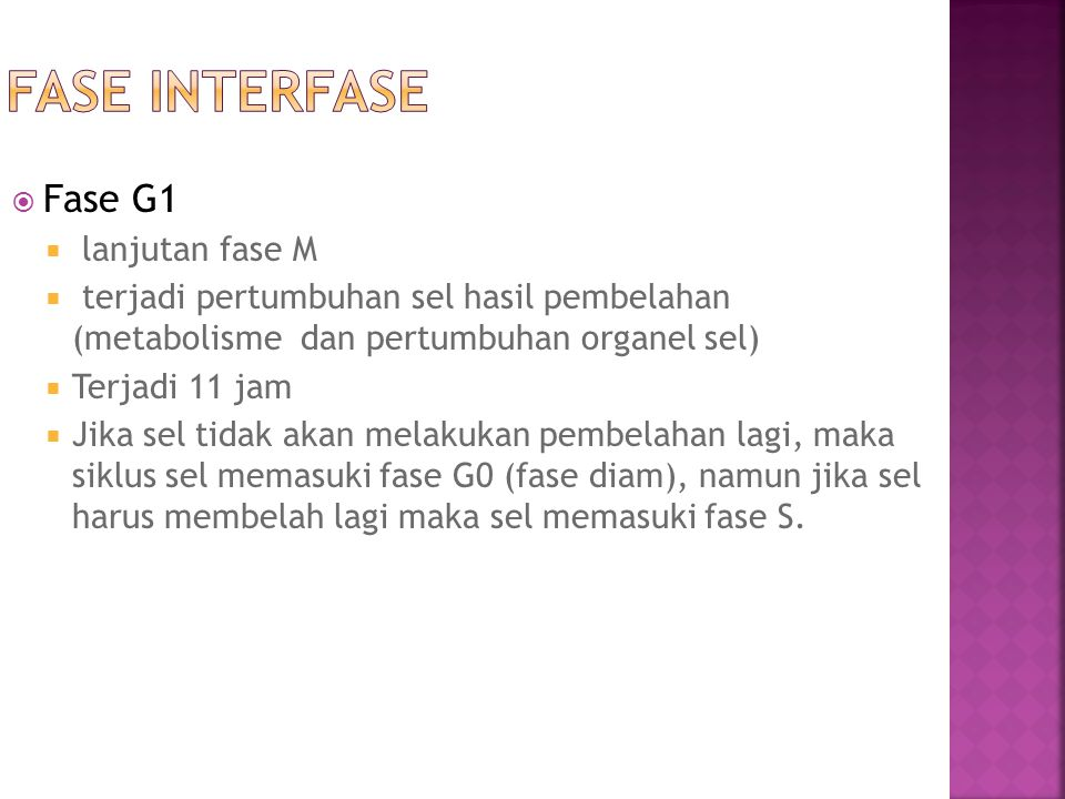 Fase interfase Fase G1 lanjutan fase M