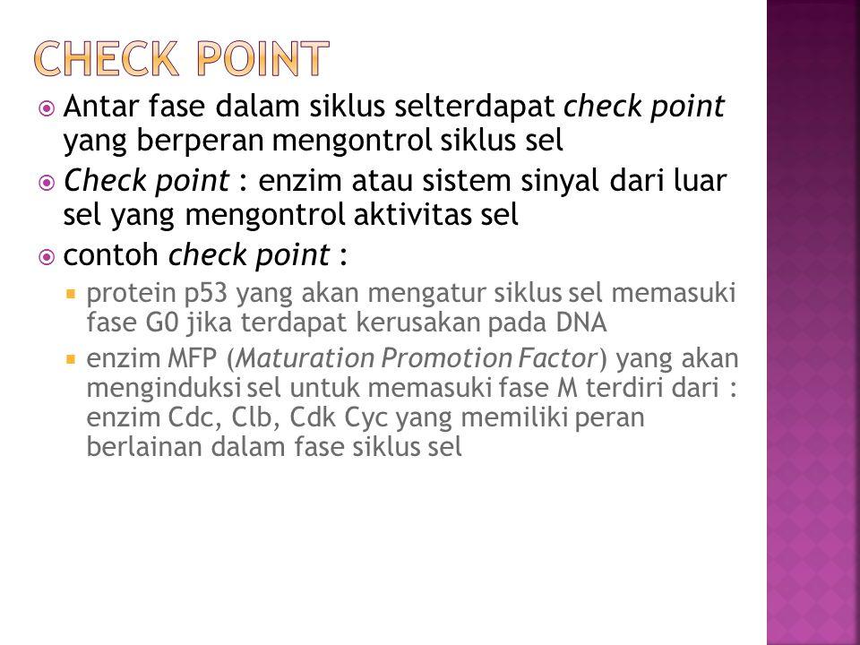 Check point Antar fase dalam siklus selterdapat check point yang berperan mengontrol siklus sel.