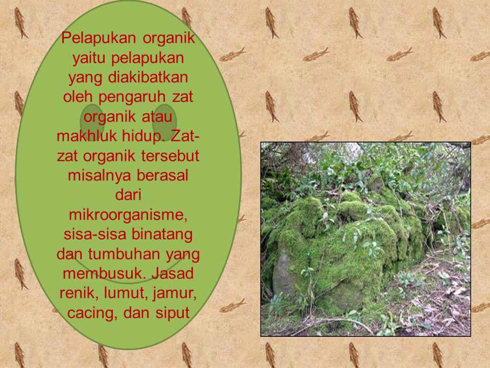 Pelapukan organik yaitu pelapukan yang diakibatkan oleh pengaruh zat organik atau makhluk hidup.