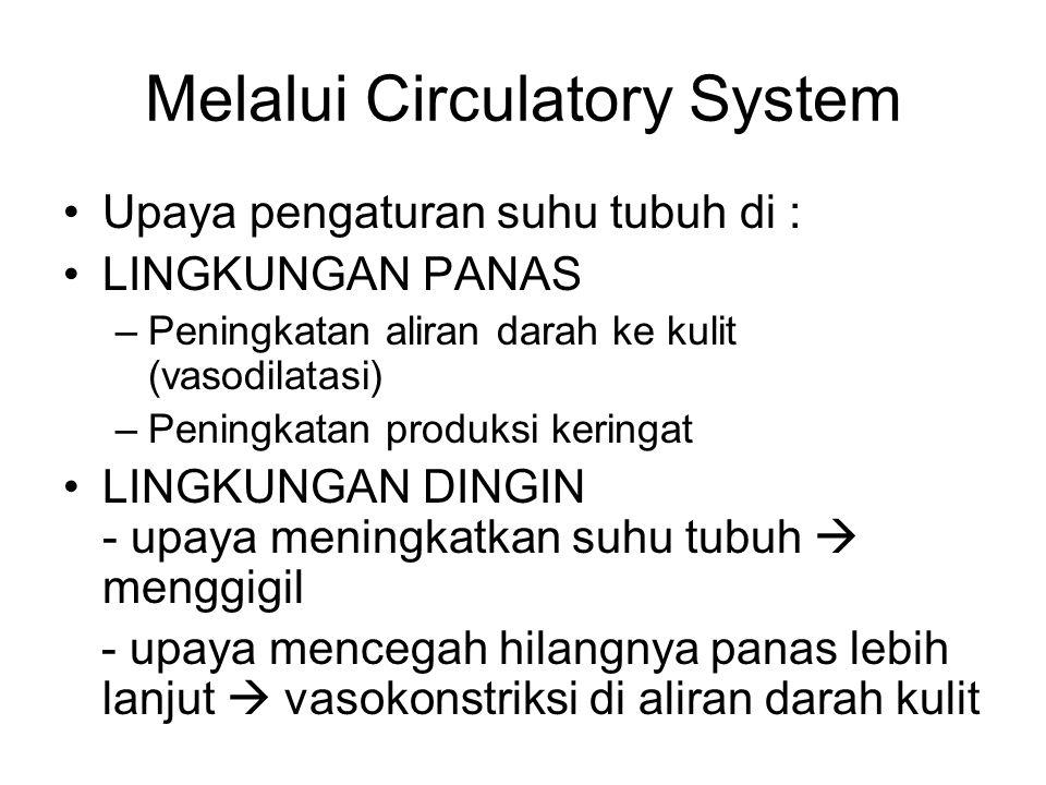 Melalui Circulatory System