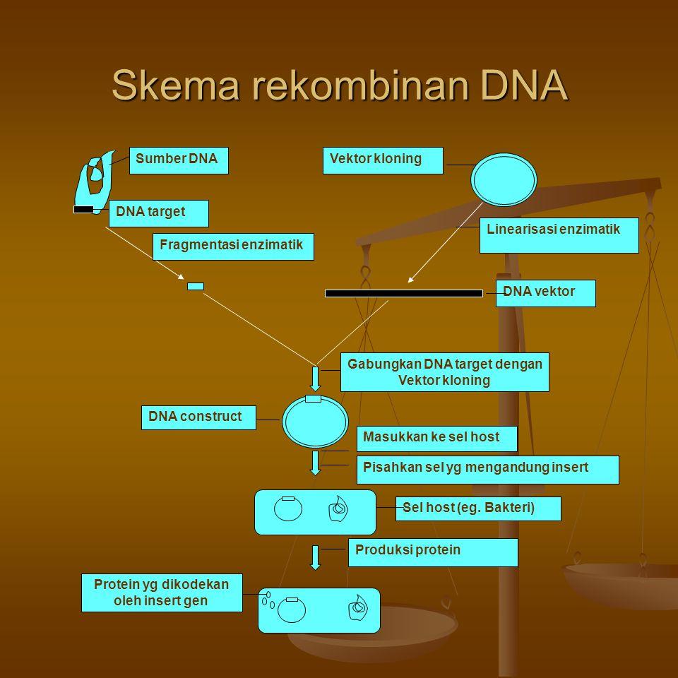Skema rekombinan DNA Sumber DNA DNA target Fragmentasi enzimatik
