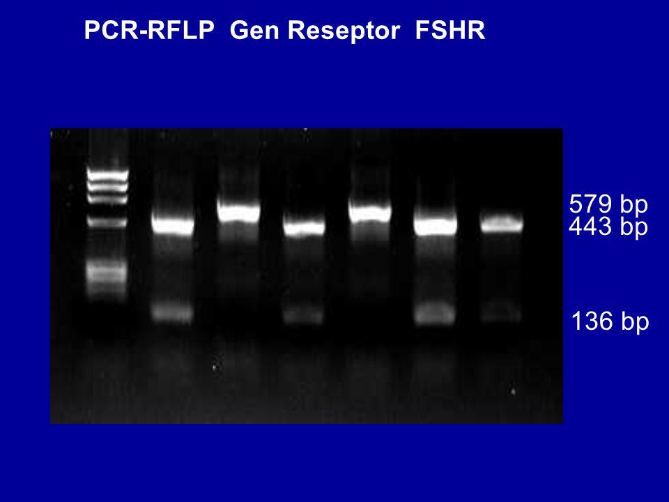 PCR-RFLP Gen Reseptor FSHR