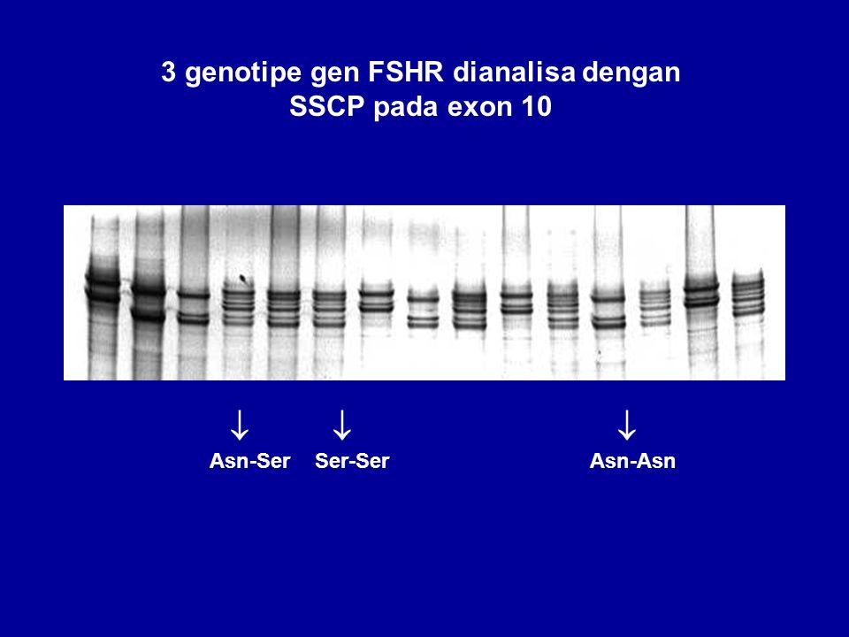 3 genotipe gen FSHR dianalisa dengan SSCP pada exon 10
