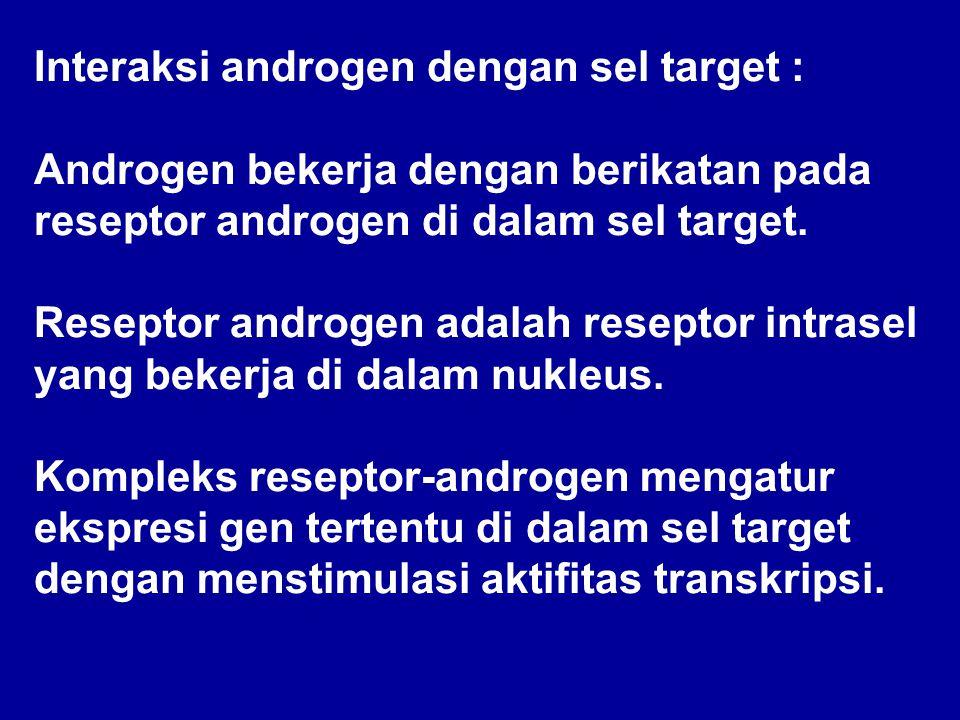 Interaksi androgen dengan sel target : Androgen bekerja dengan berikatan pada reseptor androgen di dalam sel target.