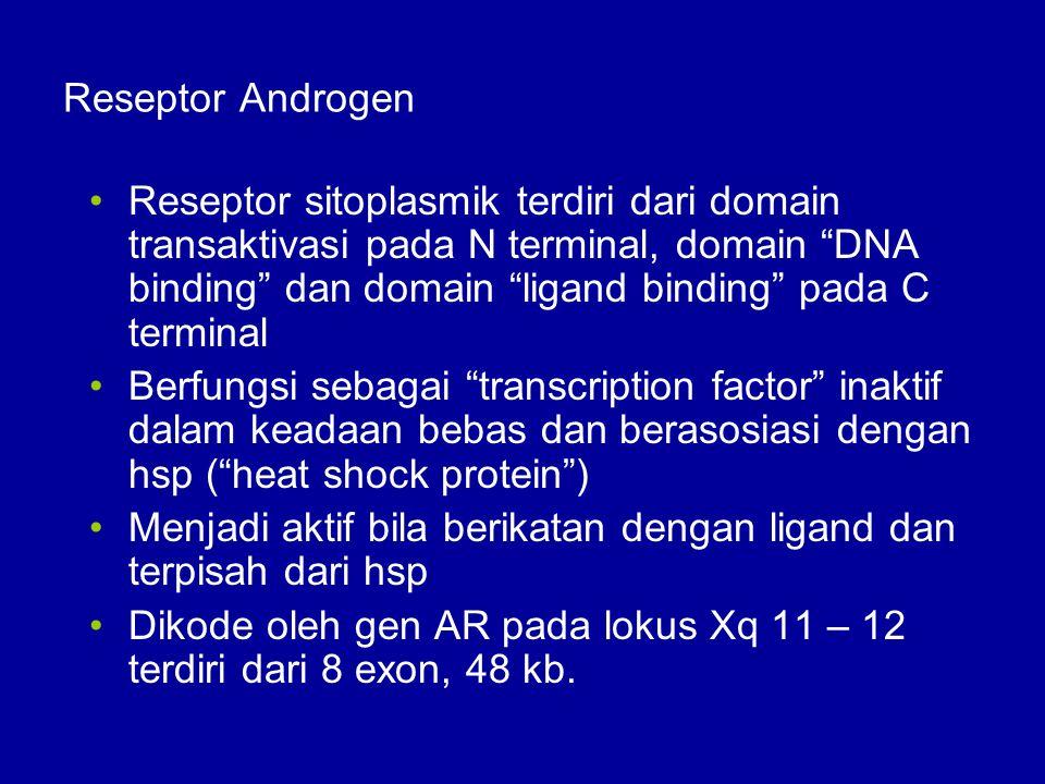 Reseptor Androgen