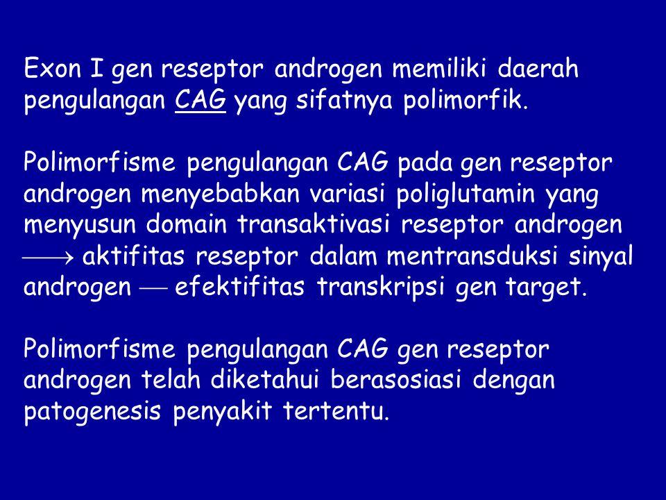 Exon I gen reseptor androgen memiliki daerah pengulangan CAG yang sifatnya polimorfik.