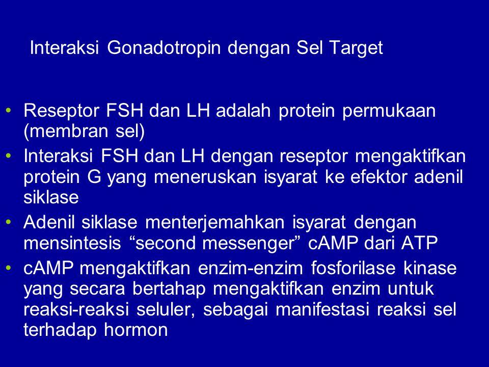 Interaksi Gonadotropin dengan Sel Target
