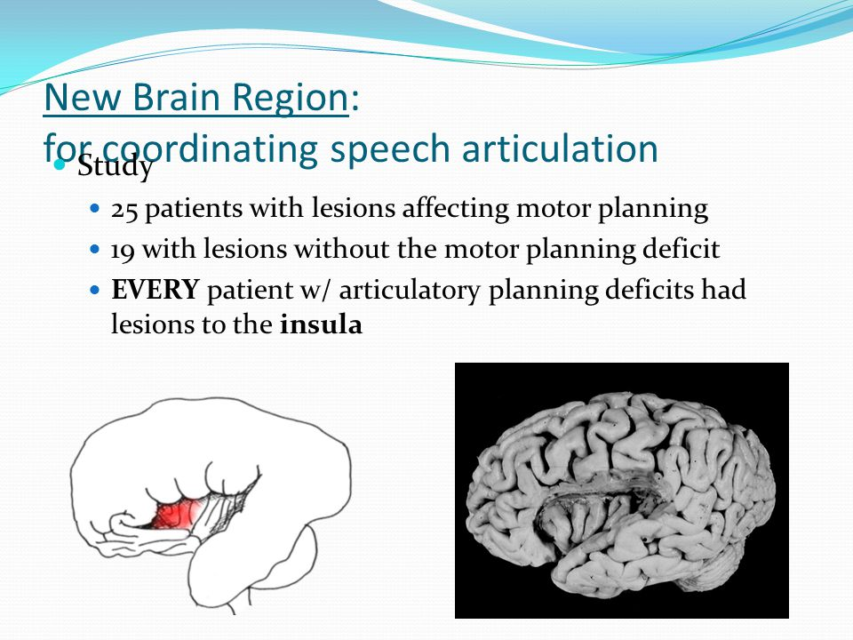 New Brain Region: for coordinating speech articulation