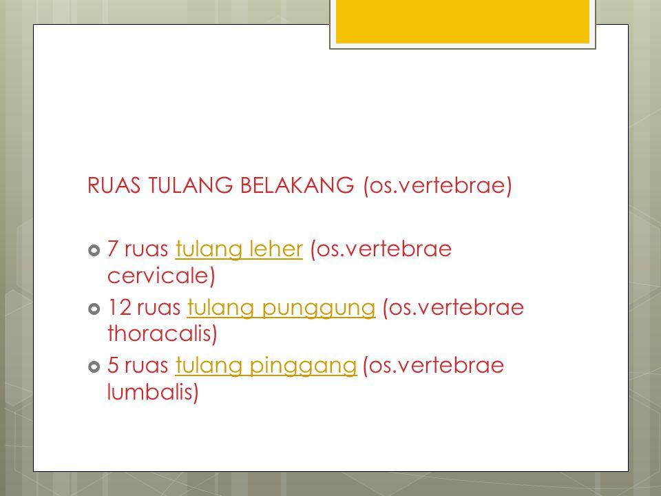 RUAS TULANG BELAKANG (os.vertebrae)