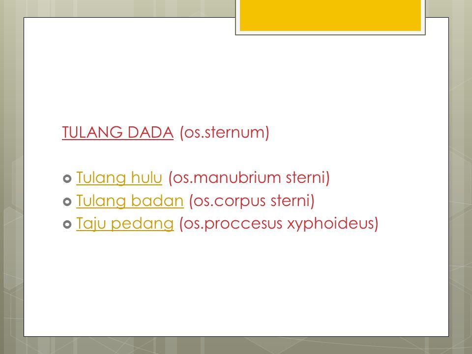 TULANG DADA (os.sternum)