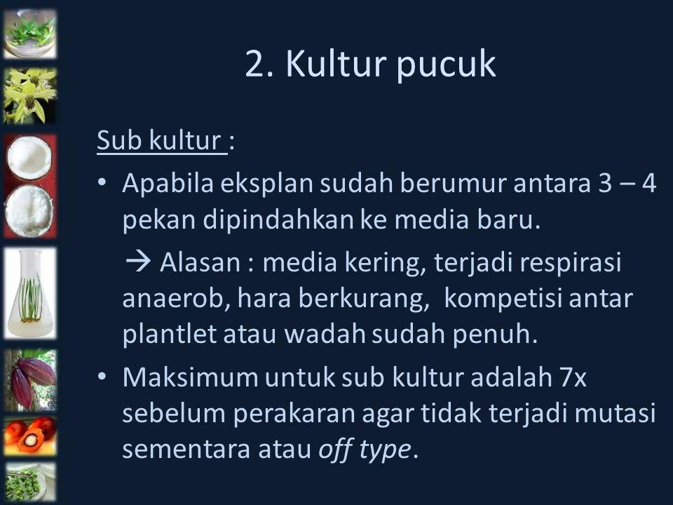 2. Kultur pucuk Sub kultur :