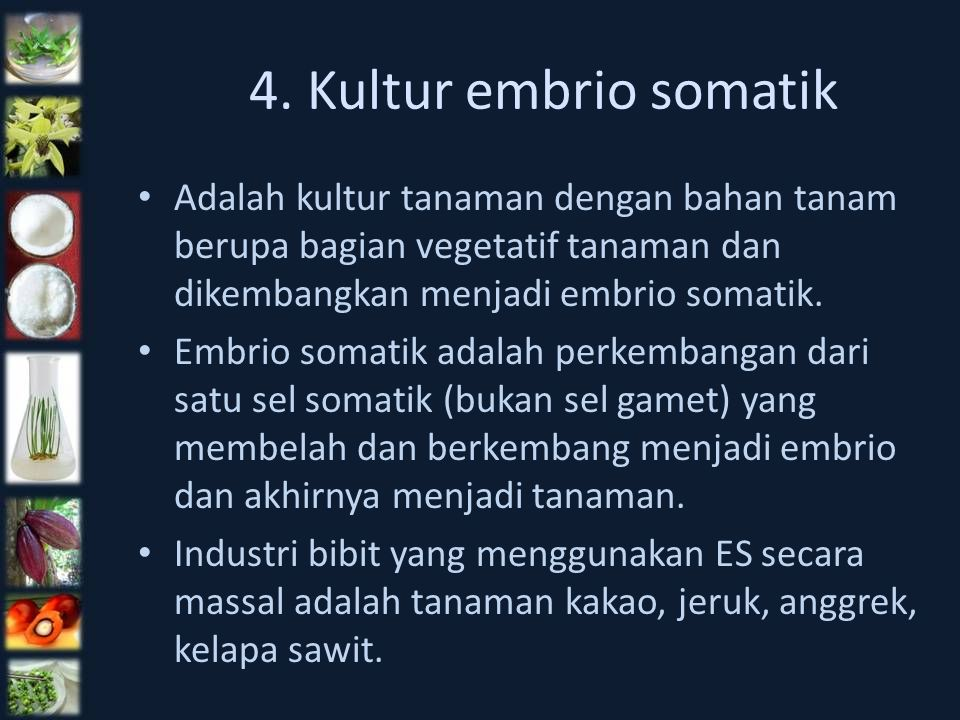 4. Kultur embrio somatik Adalah kultur tanaman dengan bahan tanam berupa bagian vegetatif tanaman dan dikembangkan menjadi embrio somatik.