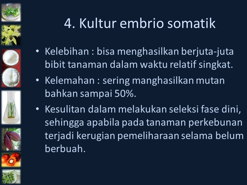 4. Kultur embrio somatik Kelebihan : bisa menghasilkan berjuta-juta bibit tanaman dalam waktu relatif singkat.